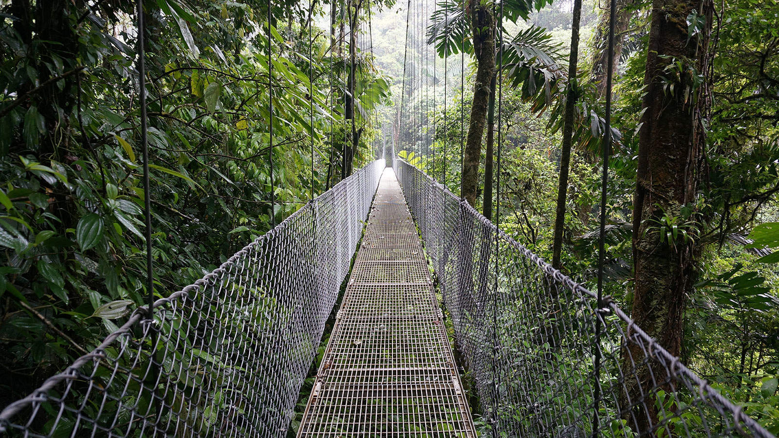 Hanging Bridges Tours : triple canopy jungle - memphite.com